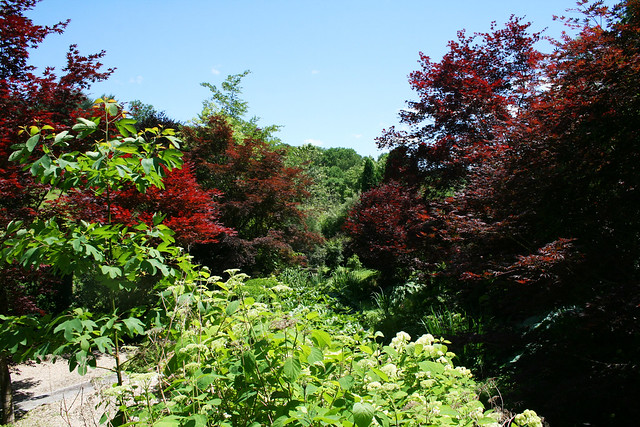 view highlighted by Acer rubrums