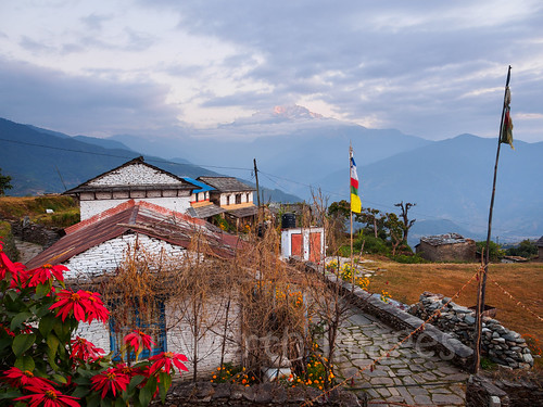 stone houses sunrise asia himalaya machhapuchare himalayas hills flowers slate clouds machhapuchchhare morning trek fishtailmountain pokhara indiansubcontinent buildings nepal kaski outdoors dawn sky village dhampus traditional