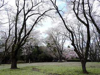 泉自然公園 23
