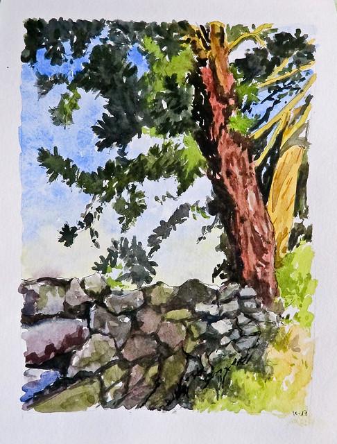 Muria y pino. Asturias