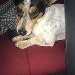 Mon, Oct 2nd, 2017 Found Male Dog - Sallins, Naas, Kildare