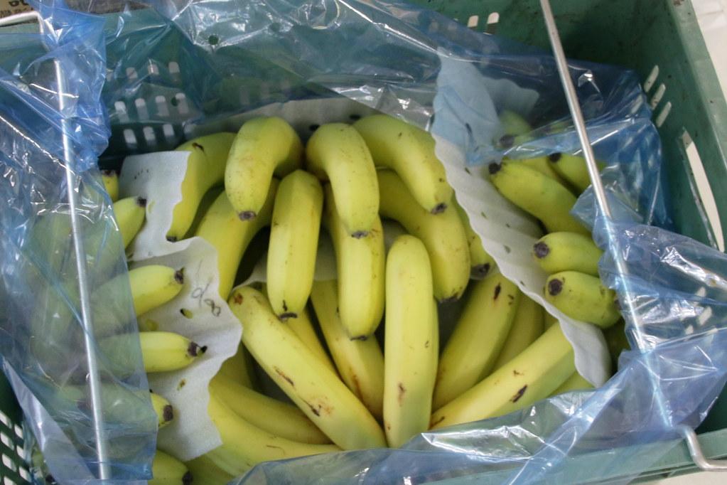 台灣香蕉科技園區 (12)