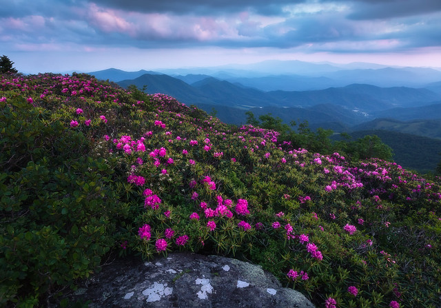 Moody Blues...  Grassy Ridge, Roan Mountain, North Carolina