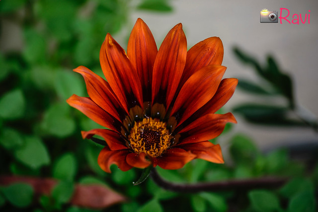 Every flower is a soul blossoming in nature........