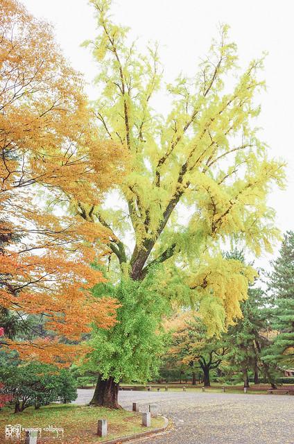 十年,京都四季 | 卷五 | 京都與我,有時還有關西 | 09