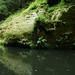 Řeka Kamenice, Edmundova soutěska, foto: Petr Nejedlý