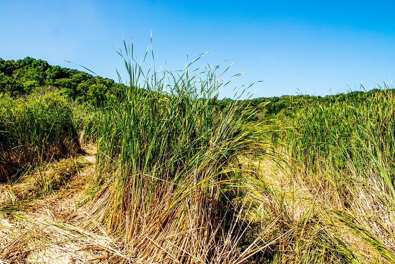 Springfield Fen Nature Preserve / Galena Marsh - July 25, 2017
