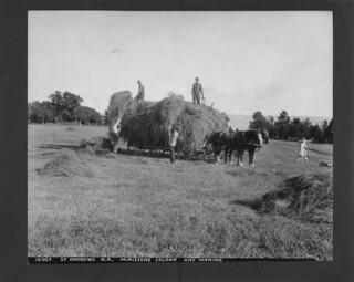 Hay making, Minister Island, St. Andrews, New Brunswick / Récolte du foin, île Minister, St. Andrews (Nouveau-Brunswick)
