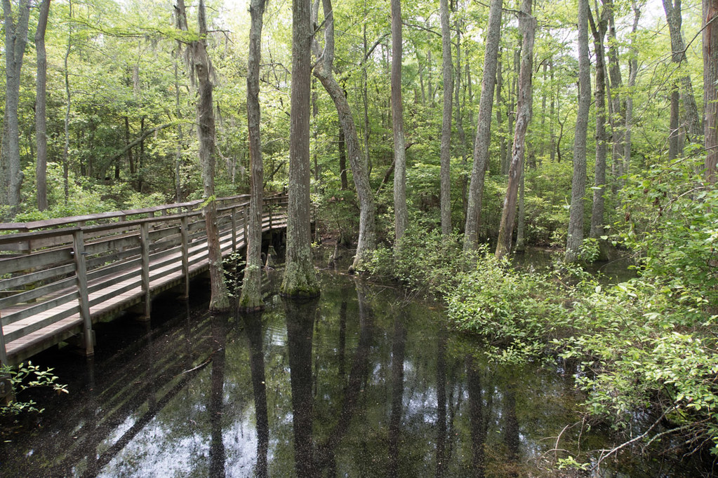 Bald Cypress trail | First Landing State Park