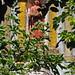 Convento de Santo António - Matos da Boiça - Portugal :pt: