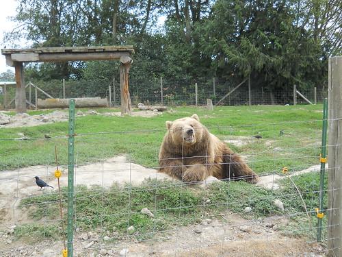 Smiling Bear #2