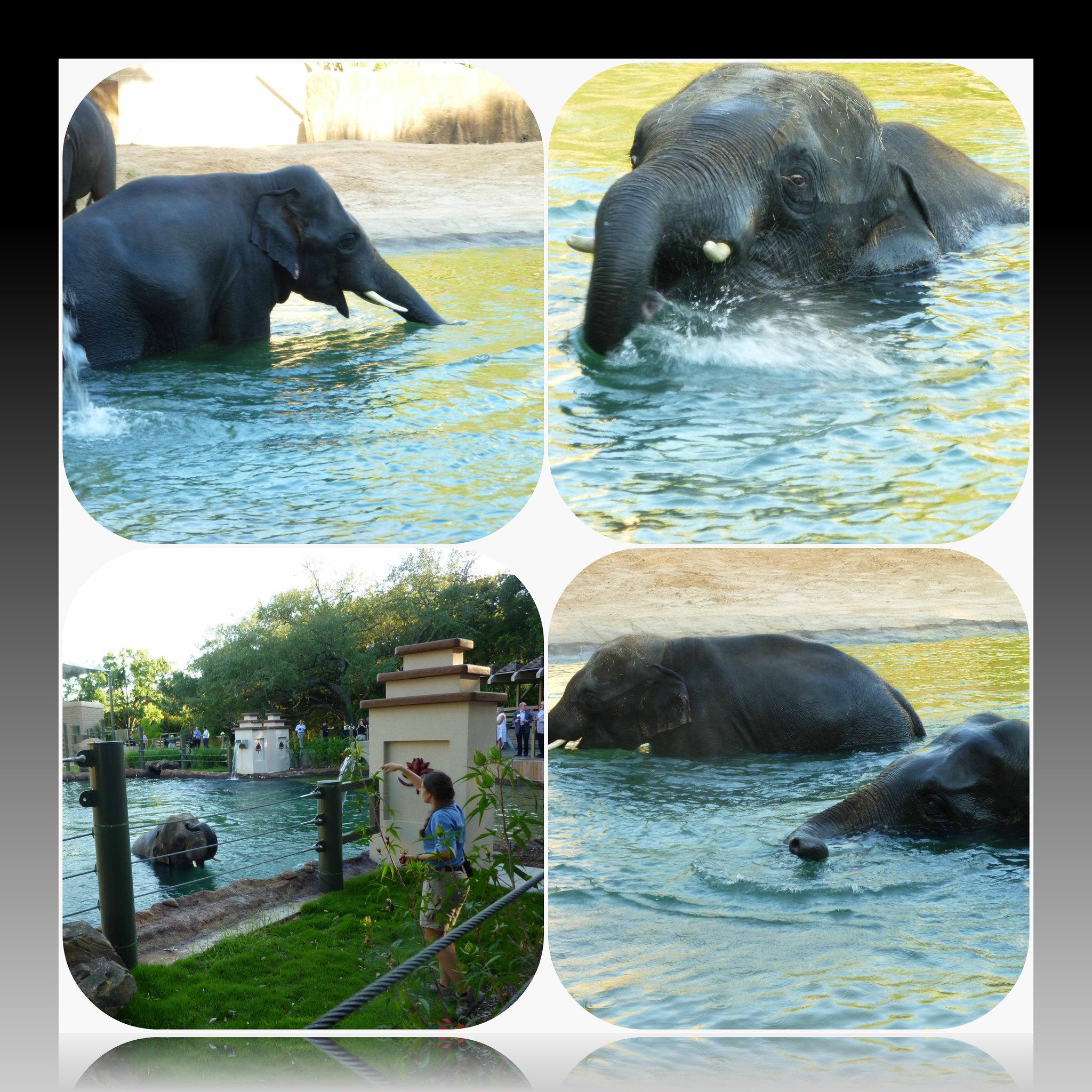 collage elephant
