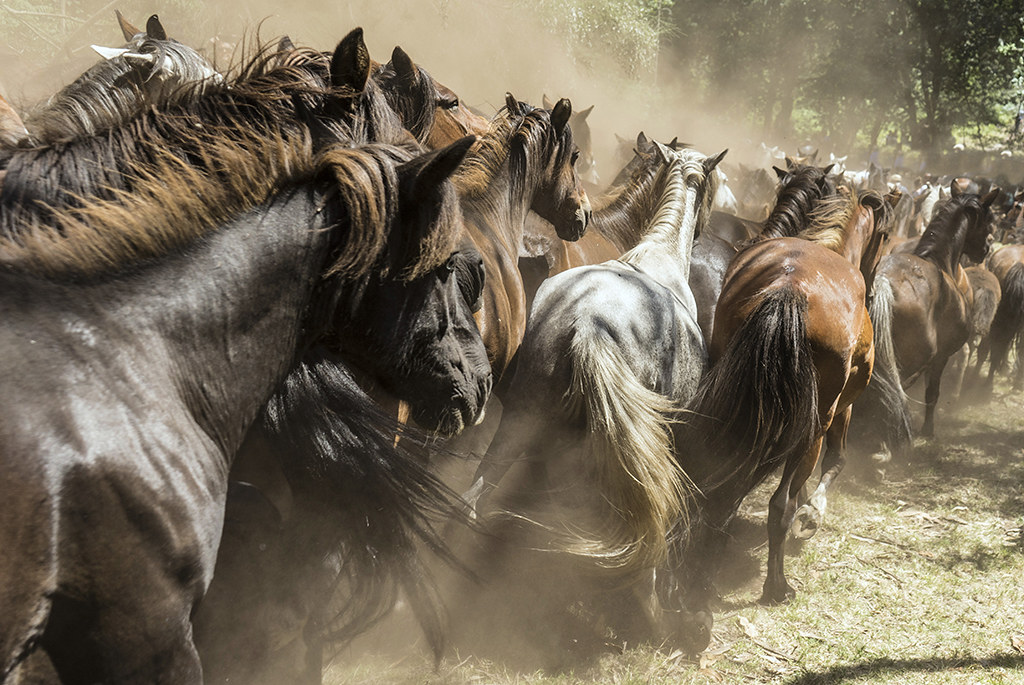 FAG09 FA21 caballos-salvages-35773f6376bdc2aa87aa318c8cb95982e0b6c198