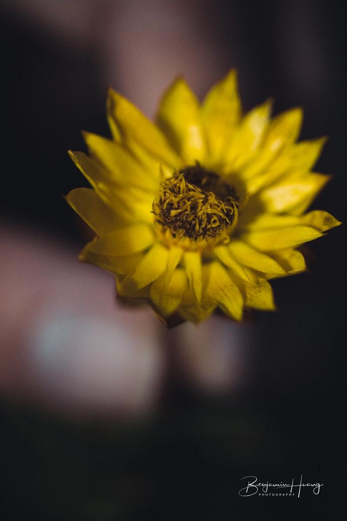 Wanniassa Hills Flower #1