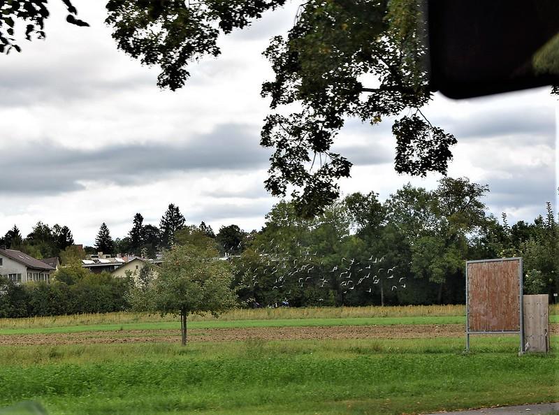 Road to Langendorf 06.09 (10)