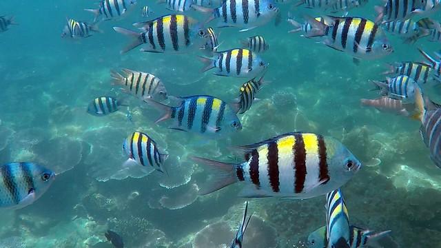 Fisk fra snorklingtur