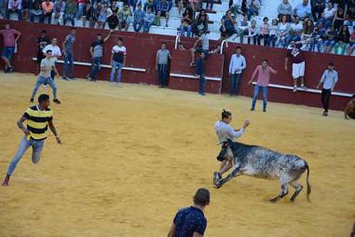 toro aguardiente 6601