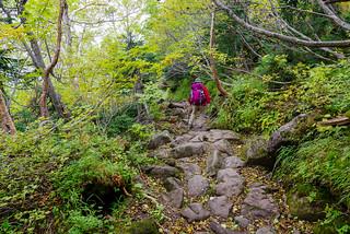 ゴロ岩の歩きにくい登山道