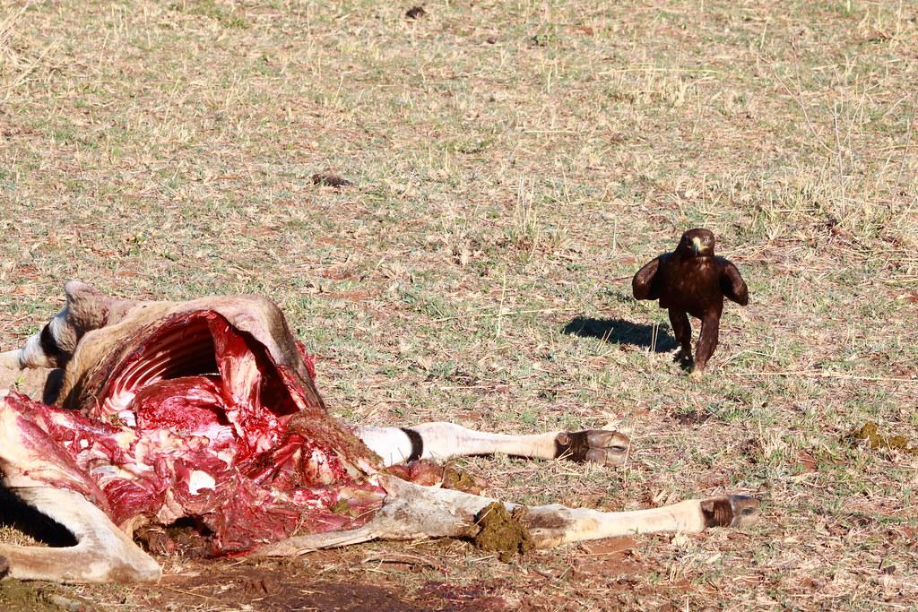 LSE near Eland kill