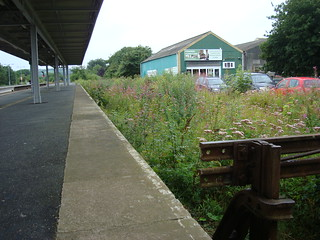 Disused bay platform at Whitland railway station with plant-life all over the track