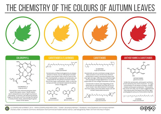 """Las fascinantes """" guerras químicas"""" del otoño"""
