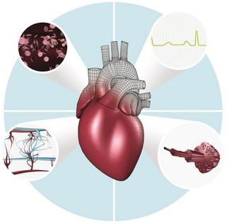 obat pembengkakan jantung tradisional