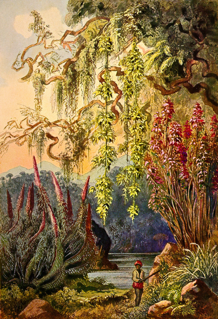 haeckel ceylon jungle
