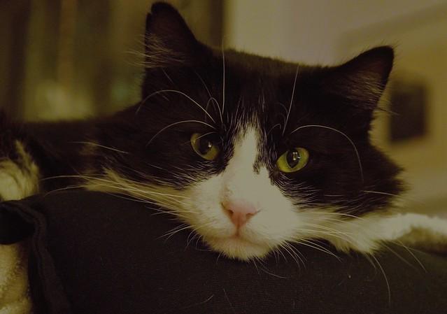Anne's cat