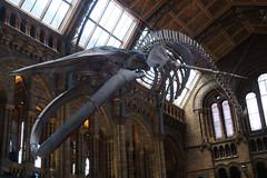 london nhm naturalhistorymuseum massivegreatbigwhale uk 2017 olympusep1