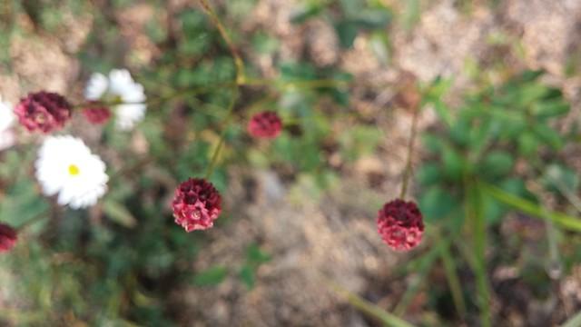 작은 것이 아름답다 | 들꽃에게 배우는 지혜