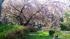 Spring In The Gardens
