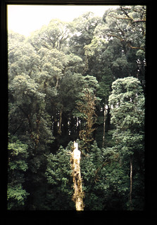 Dipterocarp Forest Of The Philippines = フィリピンのフタバガキ林