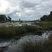Presque Isle Bogs