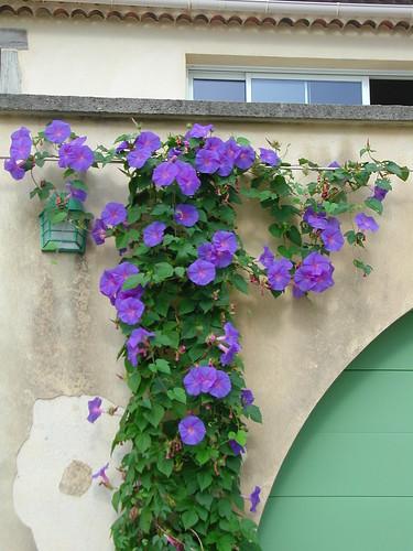 encore des beaux jours au jardin  - Page 2 36208853413_251f178c2c