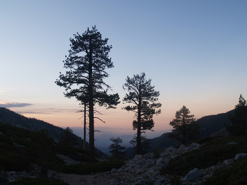 Sunrise pine tree silhouettes from Mineshaft Flat