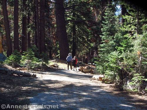 Descending the old road on the Porcupine Creek Trail in Yosemite National Park, California