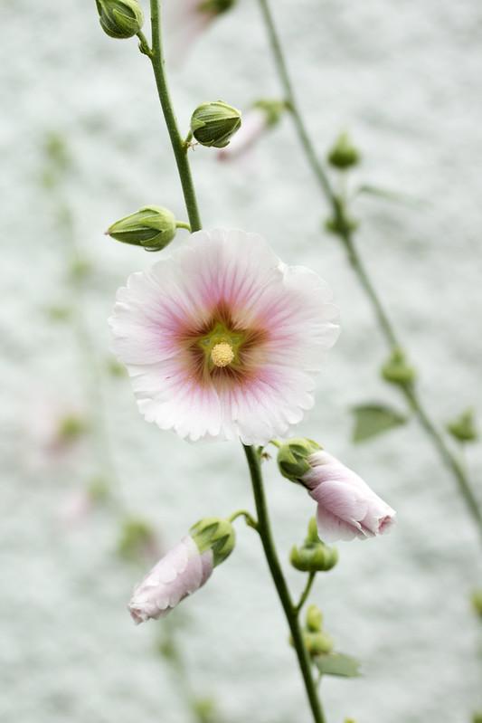 Flowers in Southwold