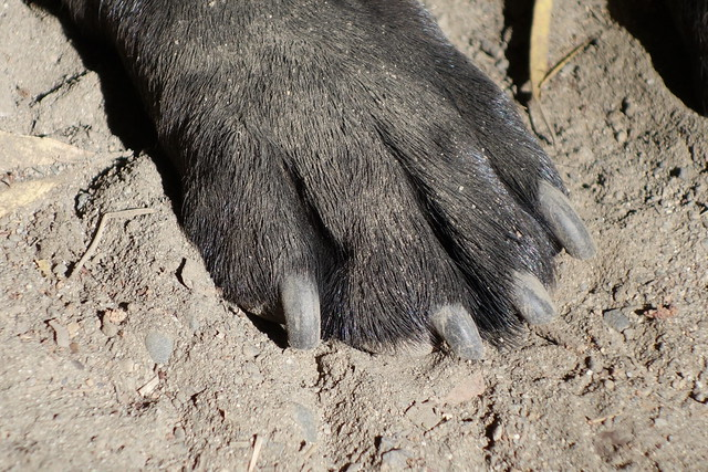 Dusty paw - close up!