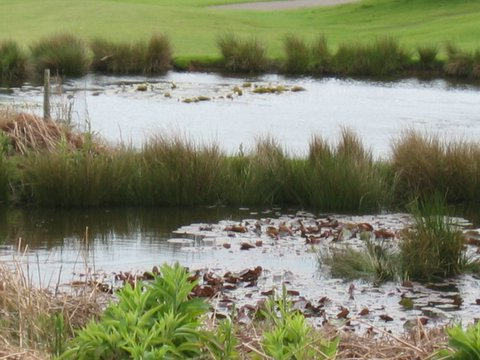 pond in knole park