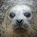 uncommonly common seal by kenny barker