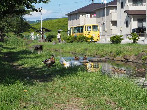 Ishinomaki 中里川