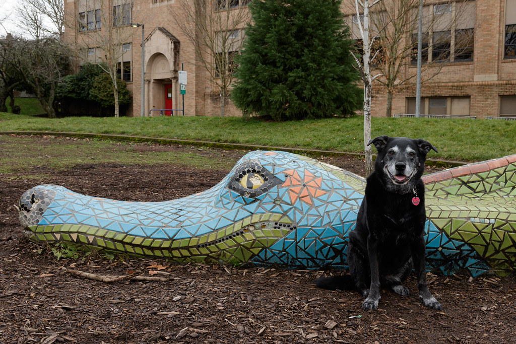 Our dog Ellie sits beside a dragon statue at Irvington School in Portland, Oregon