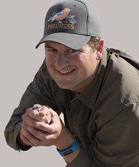 Piping Plover Banding