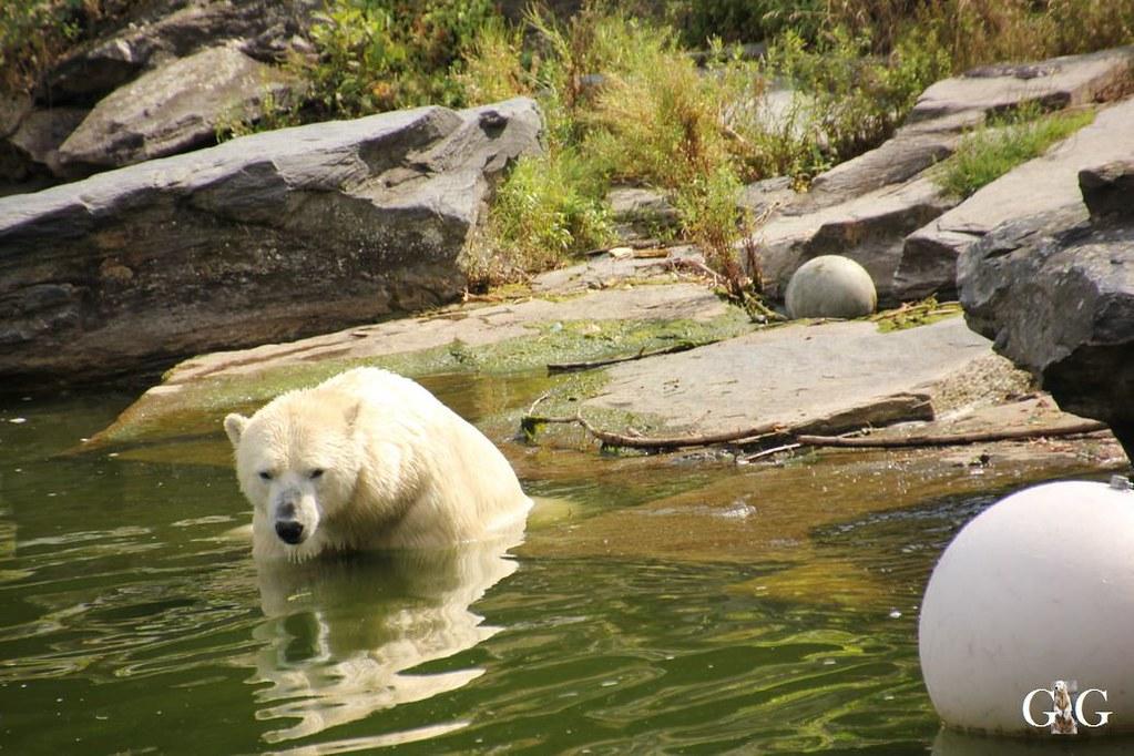 Besuch Tierpark Friedrichsfelde 20.08.1712