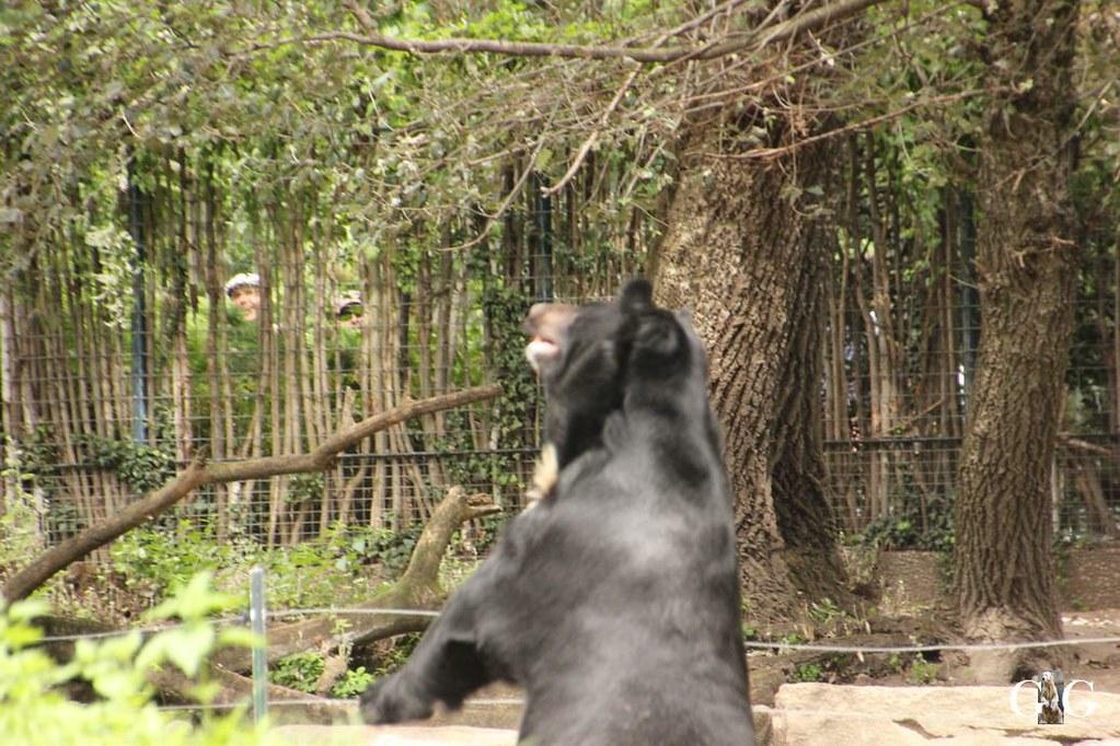 Besuch Zoo Berlin 13.08.17145