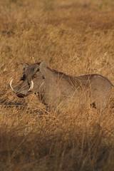 Savute in Chobe National Park