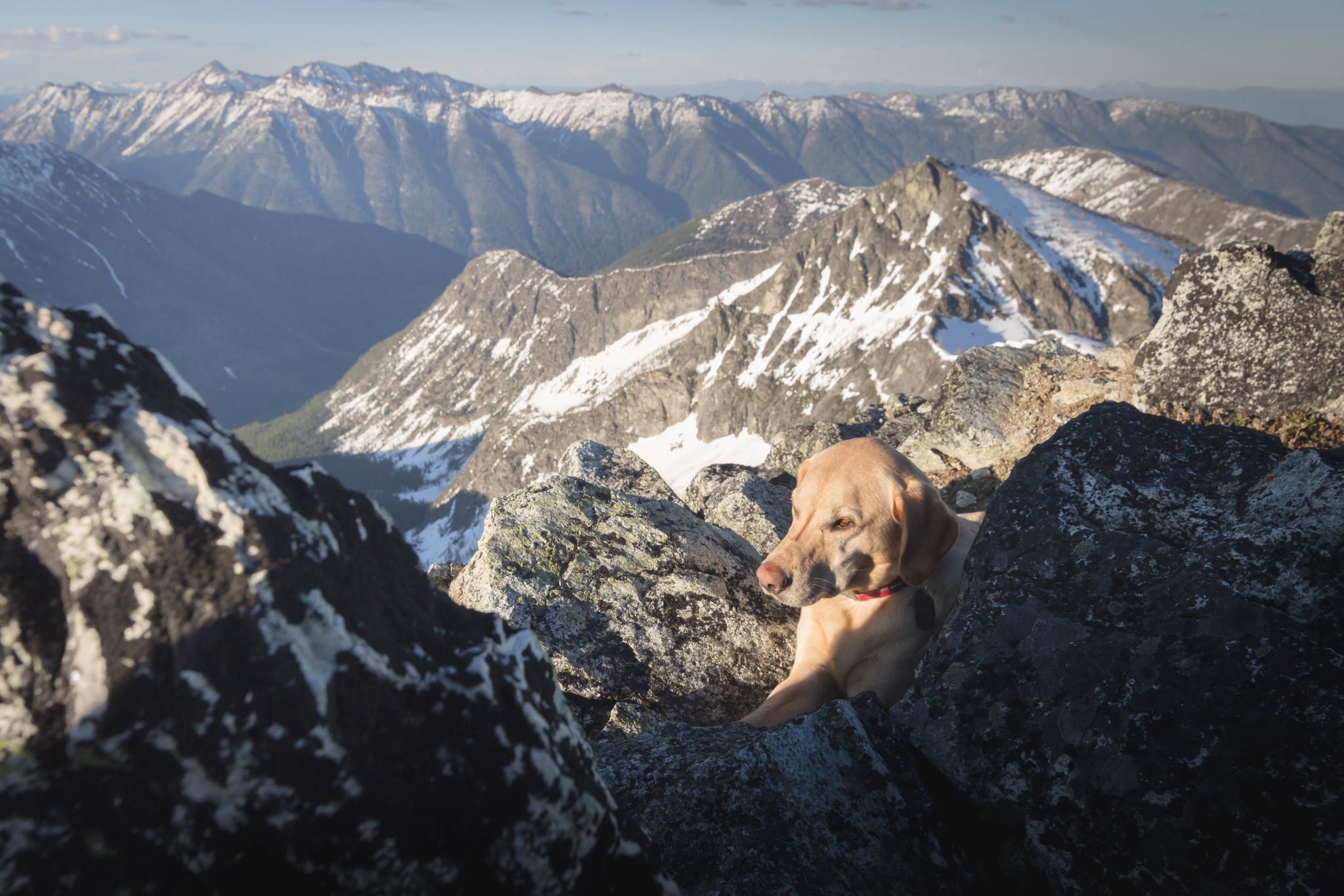 Summit dogs on Mount Gibbs