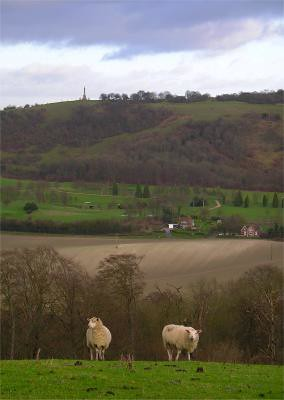 a View of Combe Hill