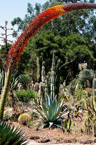 Stanford's Cactus Garden