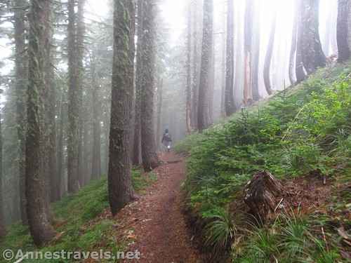 Walking down through the misty woods on the Mazama Trail, Mt. Hood National Forest, Oregon
